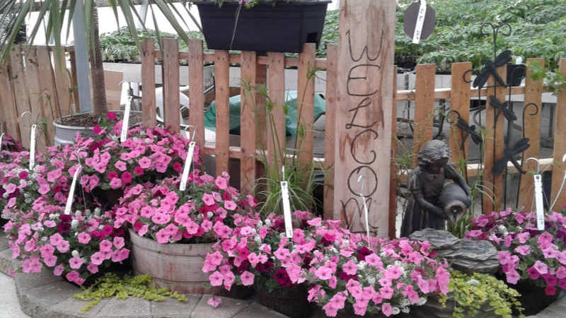 Steckle's Produce & Flowers