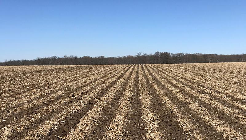 clifford-prec-field-tilled