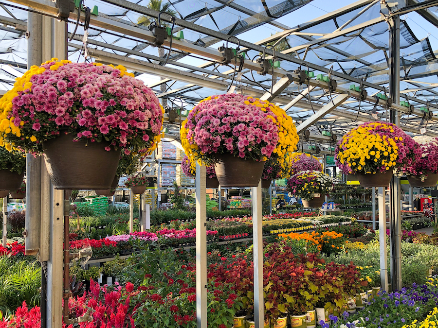 Rows Of Colorful Flowers And Plants For Sale At A Garden Nursery At The Home Depot, San Diego, Usa.